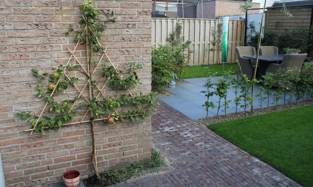 Moderne kleine en gezellige tuin greencolors